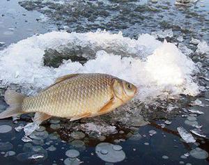 Рыбалка на летнюю мормышку