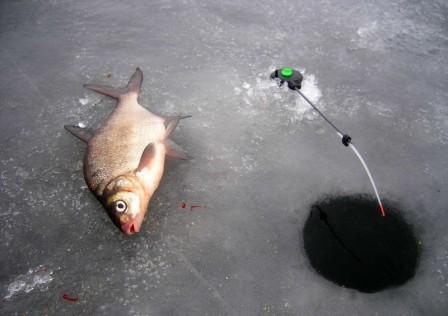 Самые уловистые мормышки на окуня для зимней рыбалки