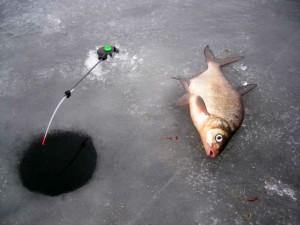 Ловля леща зимой на водохранилище