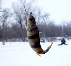 Собираясь на зимнюю ловлю, выберайте леску правильно