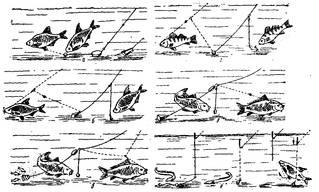Самыми распространенными наживками при донной ловле являются животные наживки
