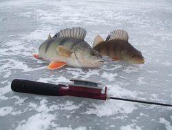 Рыбалка в декабре имеет ряд различных преимуществ перед рыбалкой в летние месяцы