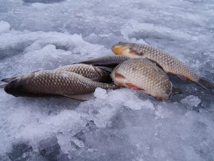 Ловля в январе потребует от рыболова терпения, выдержки, сноровки