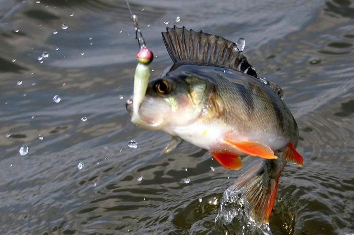 В реках с несильным, ровным течением на протяжении всего месяца с успехом можно ловить леща, густеру, подлещика и плотву