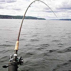 Поплавки для ловли сома