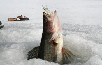 Ловля судака зимой на балансир