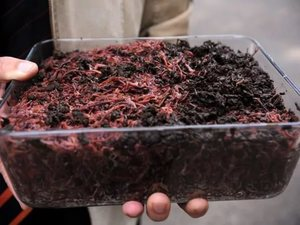 Процесс размножения червей в природных условиях