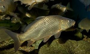 изготовление снастей и прикормки для рыбалки