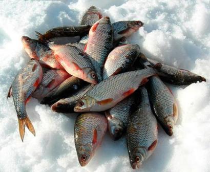 Ловим плотву со льда