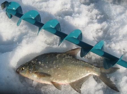 Особенности ловли леща в зимний период