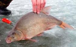 Ловля леща зимой со льда
