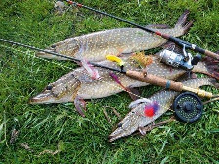 Как поймать щуку весной на реке