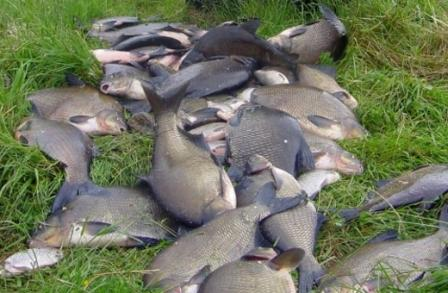 Приманки для ловли озерного леща