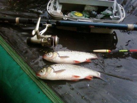 Выбор снастей для ловли плотвы с лодки