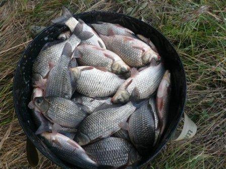 Прикормка для успешной ловли