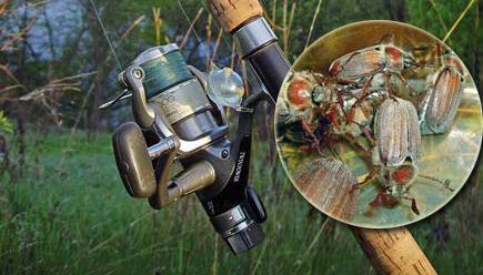 ловить голавля на майского жука видео