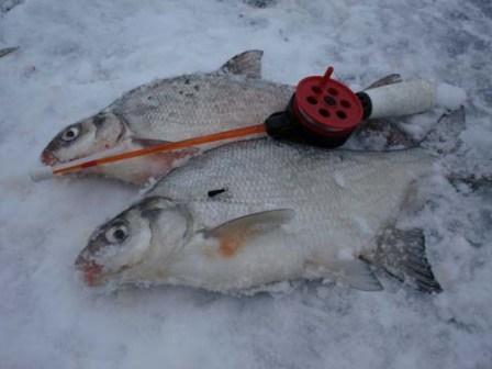 У опытных рыболовов - свои рецепты прикормки для леща зимой