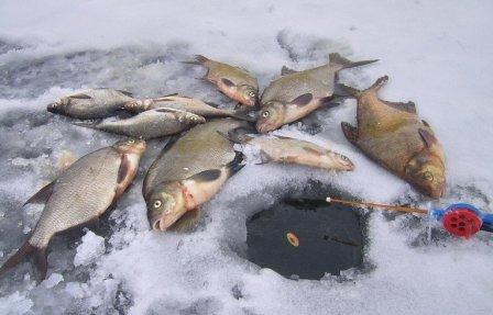 При ловле леща, необходимо на дне создать кормовое пятно, что бы удержать рыбу