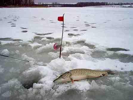 Щука, по последнему льду, активизируется и начинает клевать