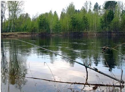 Полудонка очень уловиста на течении, поймать можно, практически, любую рыбу