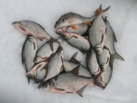 Для ловли средней рыбешки подойдут крючки №14