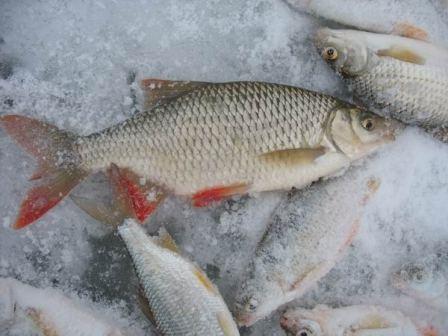Подбирая леску, стоит учитывать, что ее толщина во многом зависит от активности рыбы