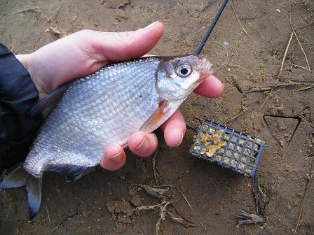 Ни на секунду не умолкают споры в среде рыболовов по поводу того, что же лучше всего использовать в фидерной снасти: плетенку или мононить