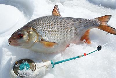 Необходимо знать водоем, на котором собираетесь рыбачить