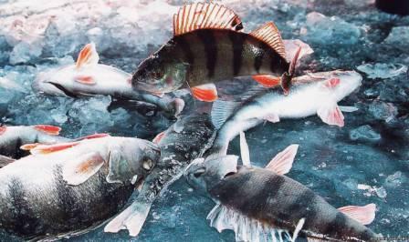 Техника и стратегия ловли выбирается в зависимости от той рыбы, которую собираемся ловить