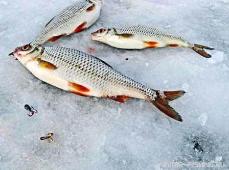 К особенностям зимней рыбалки относится то, что рыбу необходимо либо искать, высверливая определенное количество лунок, или постоянно прикармливать