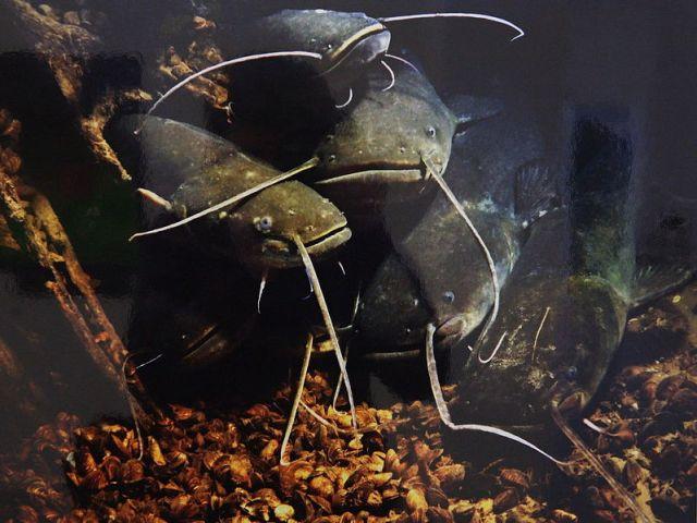 Донного типа снасти применяют в местах выхода рыбы из ям. Донку используют в основном в темное время суток