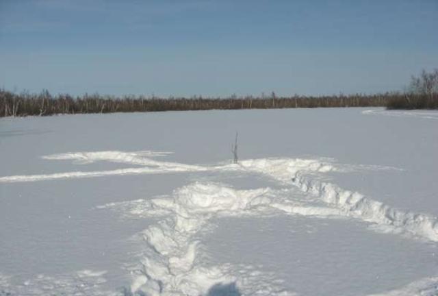 В мелких речках линь водится в удалении от берега. Чаще всего рыба выбирает заливчики и заводи в озерах, прудах и на реках