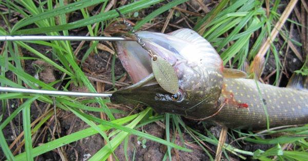Зевник, в независимости от того, самодельный он или покупной, убережет ваши руки от острых зубов рыб-хищников