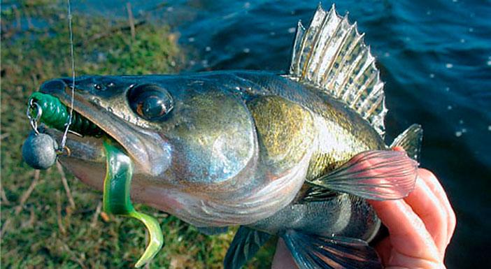Зевник позволит вам легко и безопасно освободить крючок из пасти рыбы