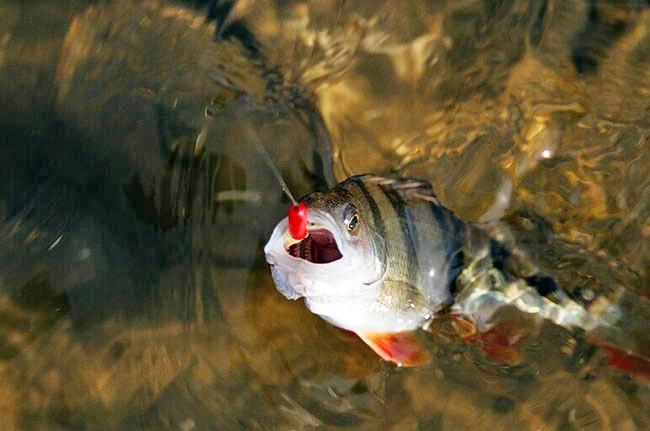 какая рыба клюет в середине апреля