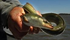 Когда едешь ловить редкую рыбу, то всегда присутствует дополнительный интерес