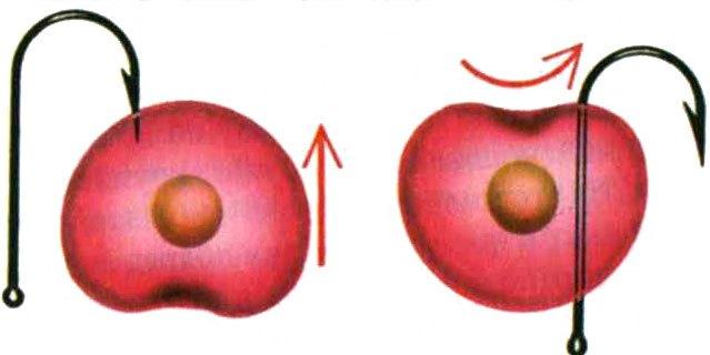 Можно применять для ловли головля такую необычную насадку, как вишня