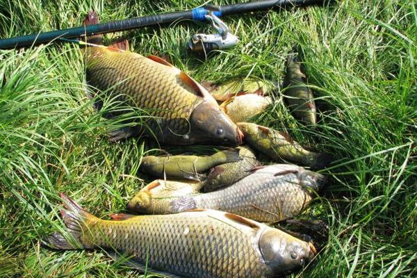 Рыбалка в июне на карася обязательно принесет удовольствие и будет интересной