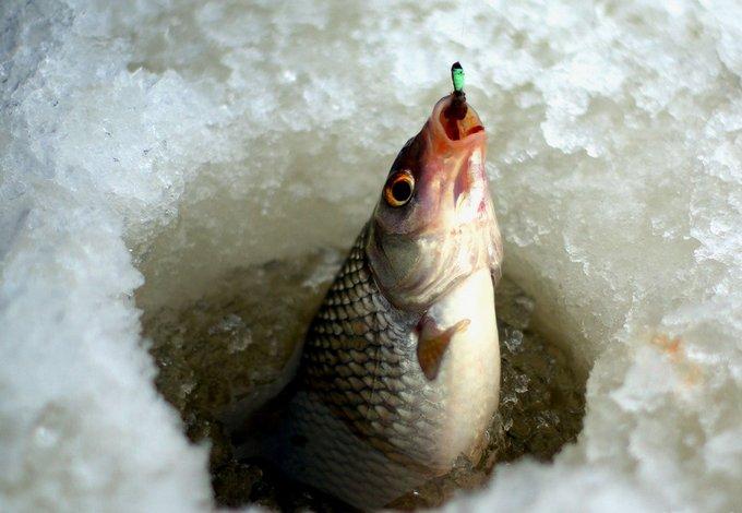 Рыбачить в Астраханской области можно круглогодично