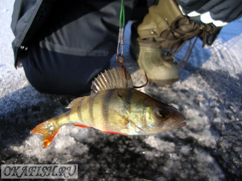 купить живца для рыбалки в донецке