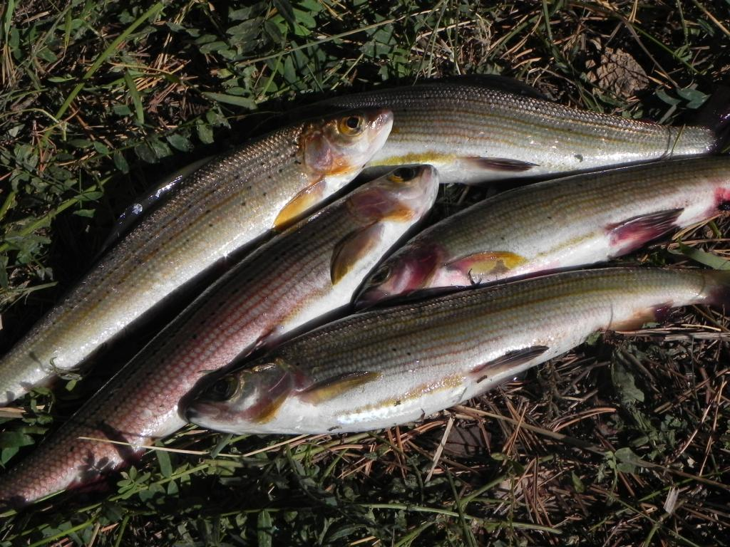 где в воркуте ловить рыбу