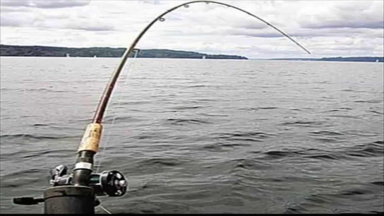 Схема удочки для рыбалки фото 943