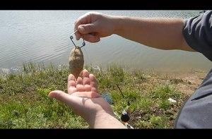 Рыбалка - ловим толстолобика