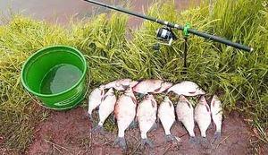 Улов леща - удачная рыбалка