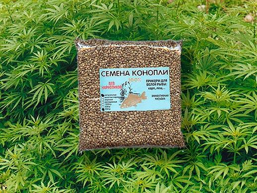 Трава конопляное семя музей гашиша марихуаны в амстердаме