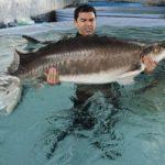Белуга- как выглядит рыба, максимальный вес, питание, нерест, места обитания, сохранение популяции
